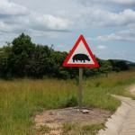 Fare for flodhest i veien