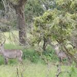 Kruger nasjonalpark