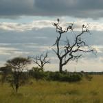 Fugler i trærne