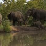 Elefantfamilie
